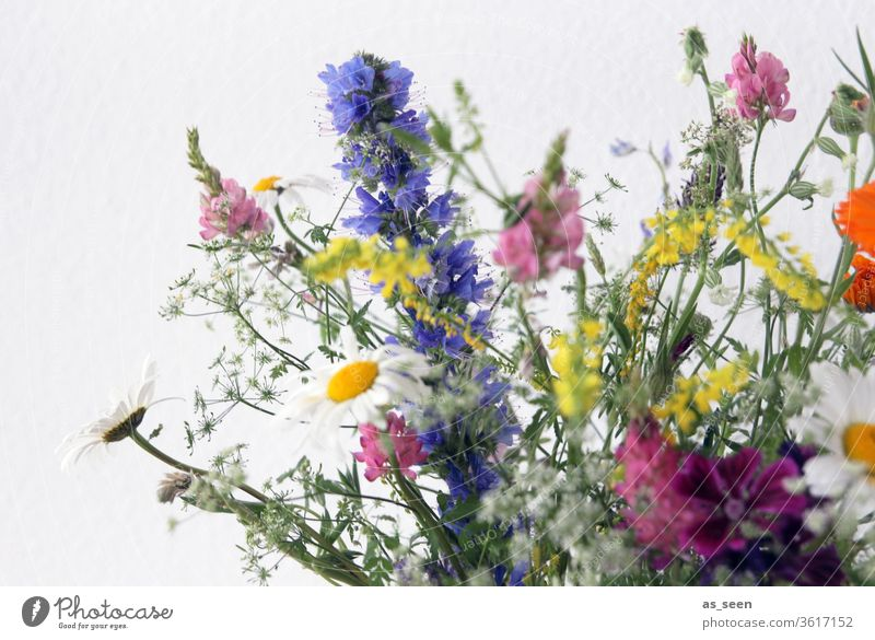 Field Flower Bouquet bleed flowers variegated Meadow Lupines Marguerites Field flowers Yellow White Pink pink green Violet purple Wild natural Nature already