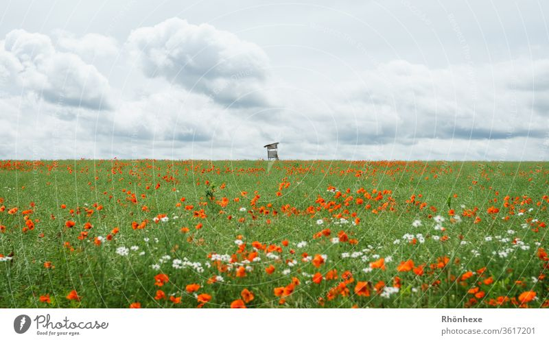 Lonely hunter's stand at the end of a flower meadow hunter's seat Hunting stand Flower meadow flowers Exterior shot Summer Summer's day Clouds Clouds in the sky