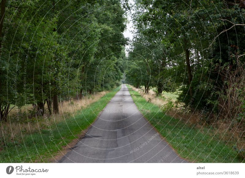 Alley - a street full of trees Avenue Street Country road Lanes & trails Landscape New start Loneliness Future Hope Right ahead Deserted Horizon Target Bicycle