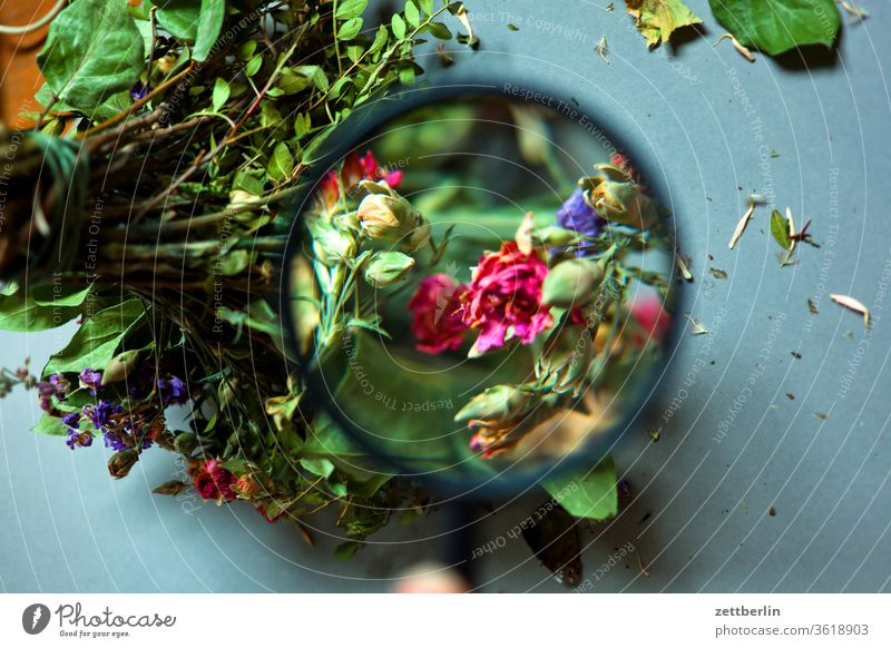 Bouquet under the magnifying glass Old flowers bleed colourless Birthday Dusty Ostrich Dry Faded Past dusty Shriveled withered Limp Magnifying glass