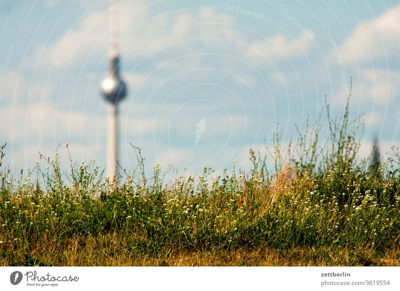 Berlin television tower behind grass alex Alexanderplatz city Germany Far-off places Television tower spring radio-and-ukw tower Capital city Sky Horizon