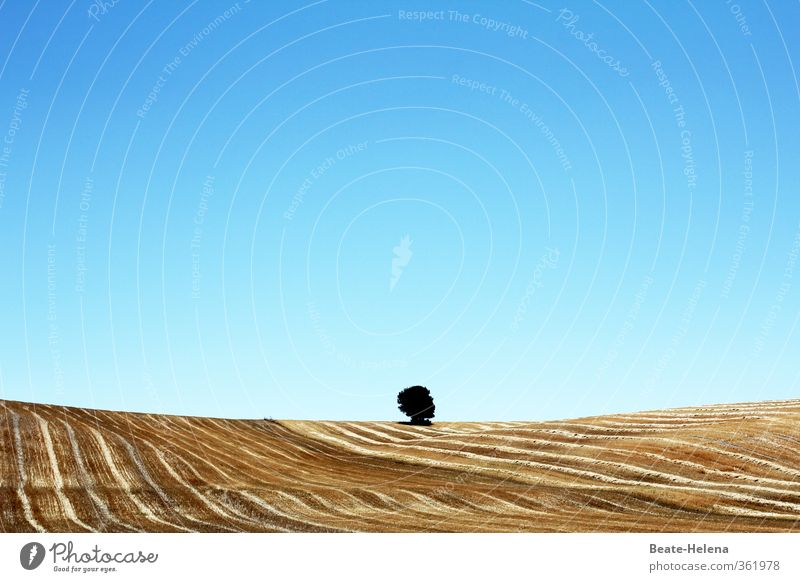 loner Summer vacation Agriculture Forestry Nature Landscape Plant Cloudless sky Sun Beautiful weather Tree Agricultural crop Grain field Field Hill Discover