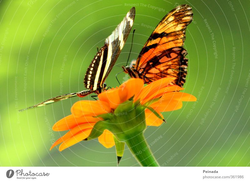 Nature Green Beautiful Plant Relaxation Flower Animal Black Warmth Blossom Bright Together Orange Flying Pair of animals Sit