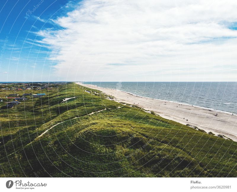 Dunes on the Danish North Sea coast in summer Denmark Nature Landscape Horizon ultra robbery Tourism Coast coastal landscape dunes Marram grass Beach Relaxation