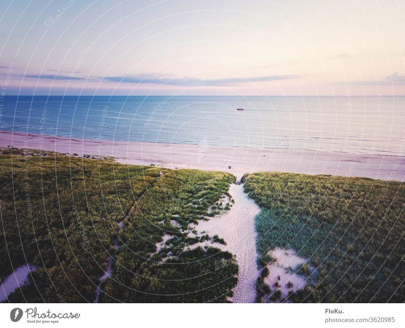 View over the dunes of West Jutland North Sea Denmark Nature Landscape Horizon ultra robbery Tourism Coast coastal landscape Marram grass Beach Relaxation