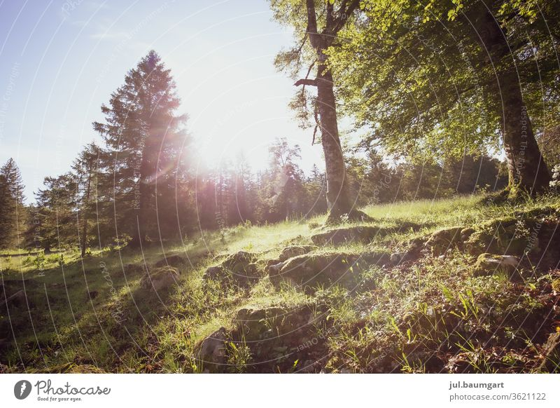 sun game Forest forest soils Meadow Nature Day Colour photo Grass Sun Light mother earth