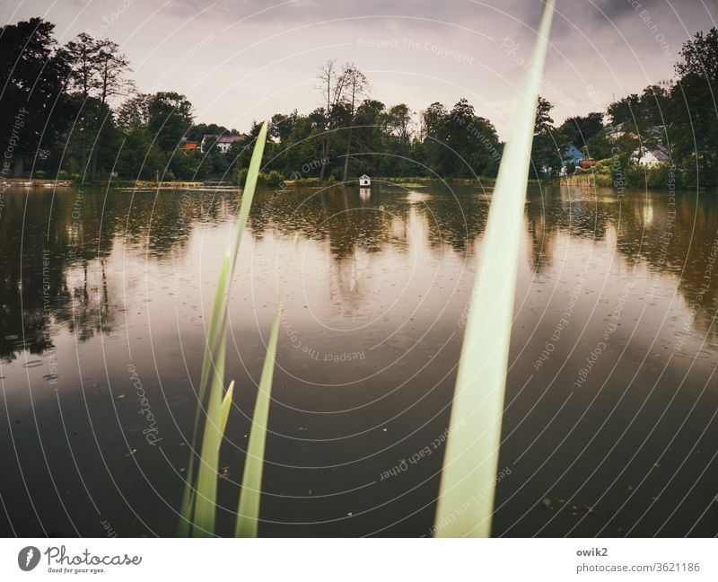 evening paper Lake Evening Dusk silent somber reed Water Surface of water Rain Clouds Raincloud Horizon Reflection Trees conceit windless Idyll dreamy Nature