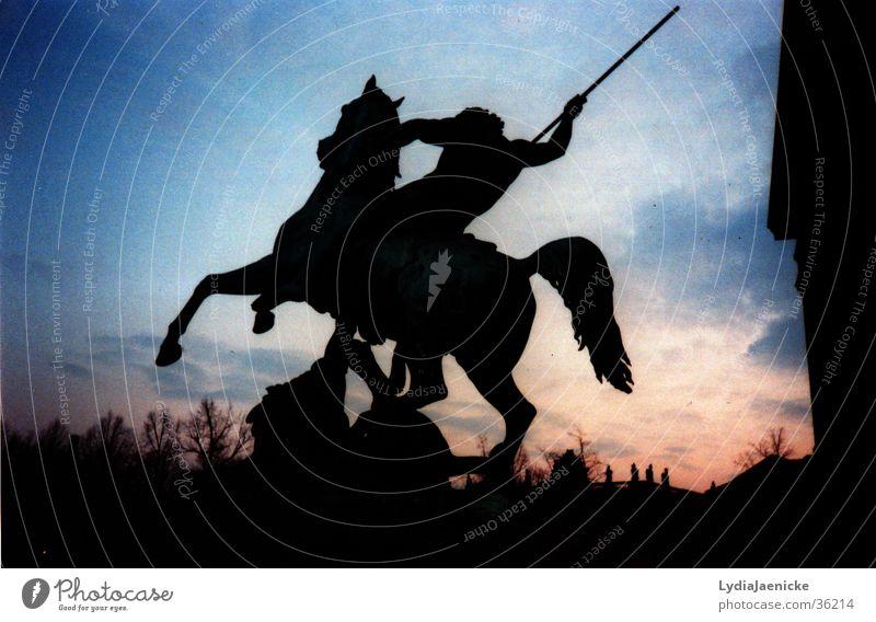 Rider at night Red Horse Equestrian sports Night Dark Exhibition black Blue Wild animal