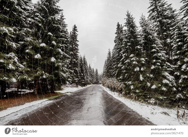 scenic view of the road with snow and mountain and giant trees background in winter season. Morske Oko sky mountains white nature weather blue travel landscape