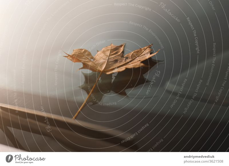 autumn leaf on a car windshield. yellow maple leaf on glass blades city abstract close closeup clouds concept copyspace drops fall macro nature october one
