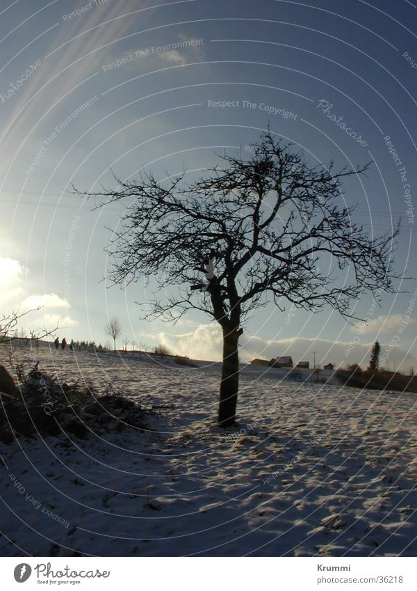 hibernation Tree Sunrise Sunset Structures and shapes Field Winter Snow Morning Evening Shadow Blue Sky