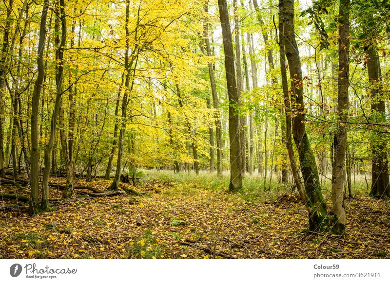 Forrest wood park green outdoor foliage environment landscape sunny sunlight nature tree background forest panoramic scenery season enchanting panorama summer