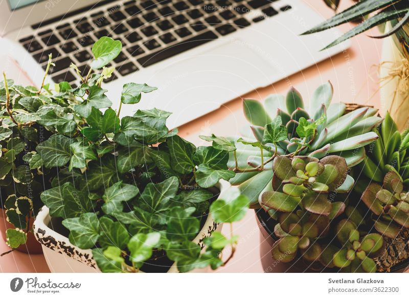 Remote online purchases of garden plants and equipment. A comfortable stylish freelancer's workplace with laptop and indoor plants succulents remote distance