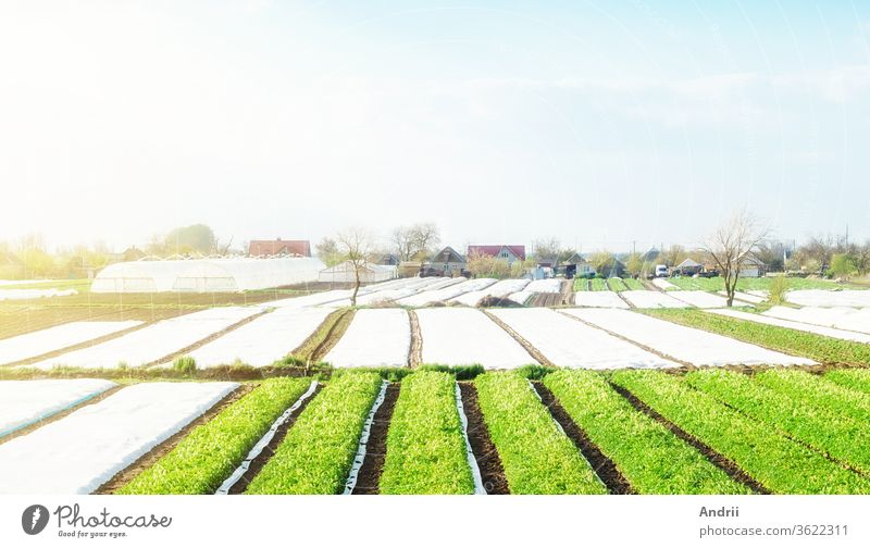 Landscape of farmland plantations covered with agrofiber. Agroindustry and agribusiness. Beautiful countryside. Organic farming products in Europe. Agricultural industry growing potatoes vegetables.