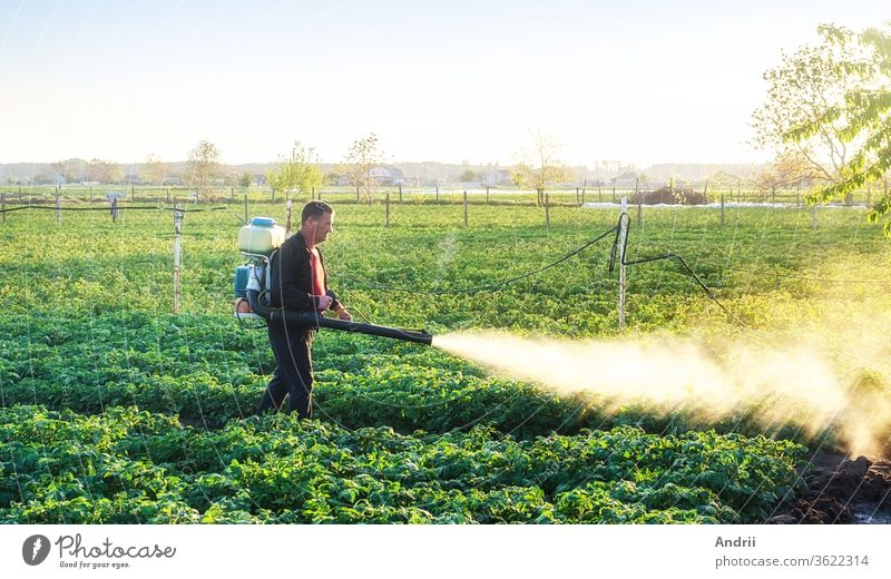 A farmer sprinkles a potato plantation with an antifungal chemical. Use chemicals in agriculture. Agriculture and agribusiness, agricultural industry. Fight against fungal infections and insects.