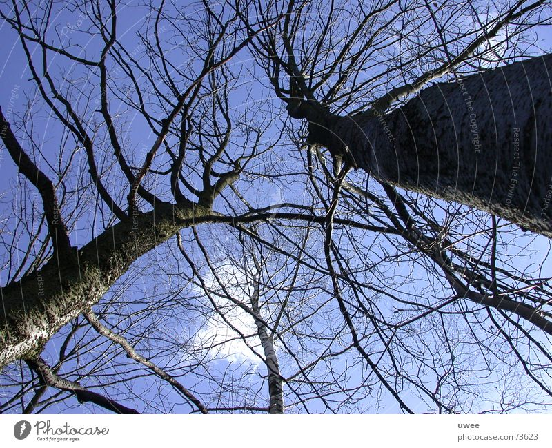 giant trees Tree Clouds Forest Photographic technology Blue Sky