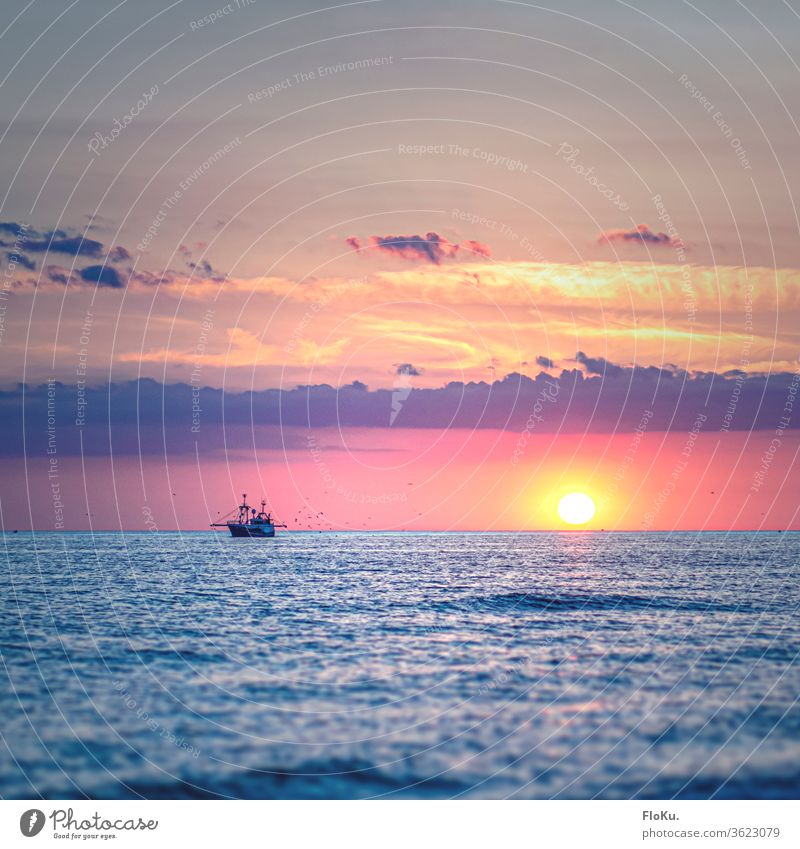 Fishing cutter on the North Sea has the gulls in tow Sunset Ocean Beach Water Sky Waves Coast Clouds Twilight Summer Sunlight Vacation & Travel Exterior shot