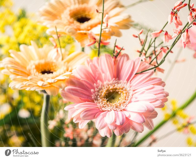 Bunch of beautiful flowers gerbera closeup woman day card greeting pastel flat lay spring holiday festive background invitation pink mother wedding minimal