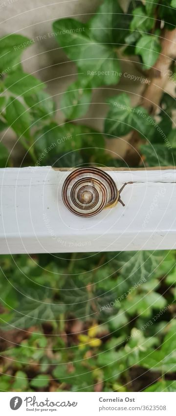 Garden snail photographed from above. Let's take a look at what's happening outside Crumpet Snail shell Animal Slowly Feeler Crawl Slimy Close-up Exterior shot