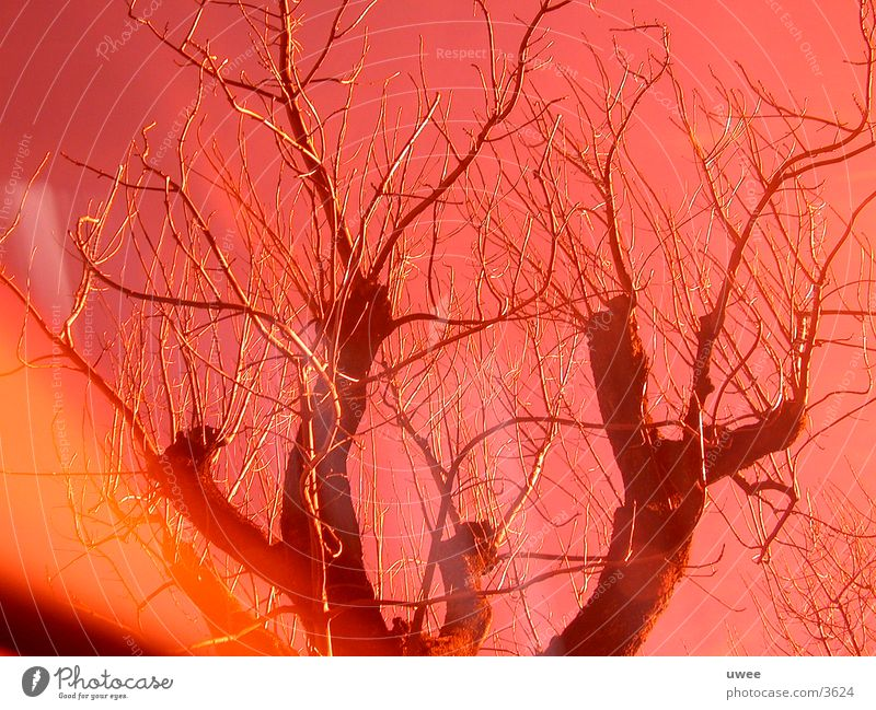 Tree Red Leaf Orange Deciduous tree Photographic technology Leafless