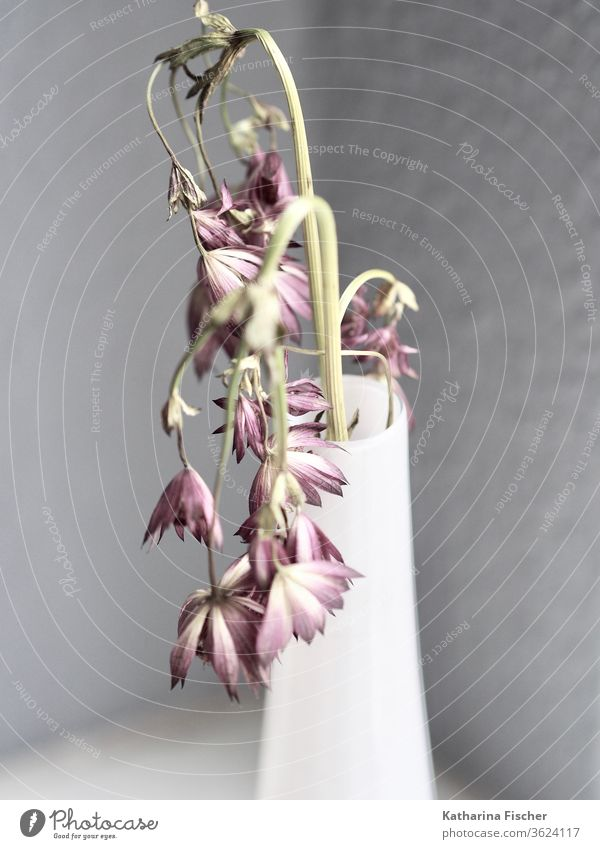 Time goes by, field flowers in white vase Nature Summer Interior shot Decoration Vase vase with flowers Simple Style stylisch grey White delayednet Purple