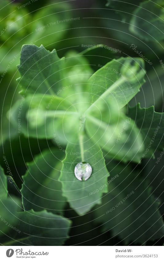 a single raindrop on a leaf flaked Plant raindrops Wet Water Fine detail Detail scarcity Drought Foliage plant green Nature Drop Drops of water Rain