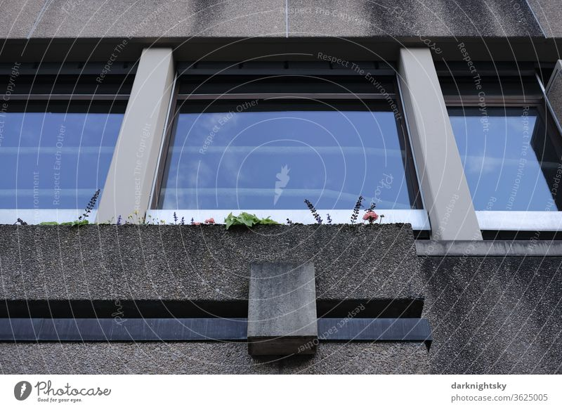 Concrete architecture with windows and flowers in a box Window box Architecture brutalism Facade Redecorate Redevelop Symmetry symmetrical grey color