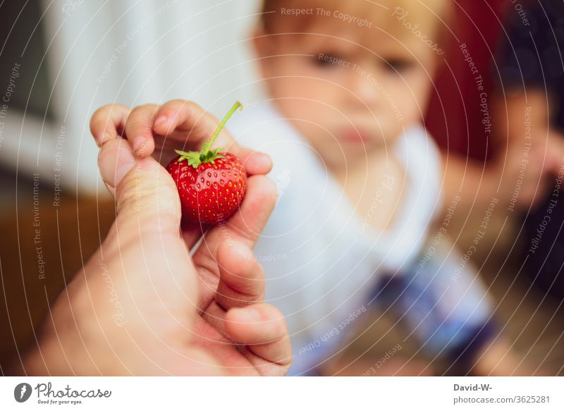 Child gets a strawberry from father Strawberry Time fruit tidbit already berry fruit fruit varieties Fruit cake garnered Collector Summer's day Summery reap