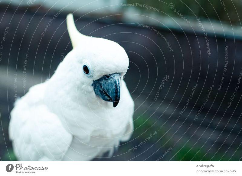 Nature Beautiful White Animal Bird Elegant Feather Soft Clean Creativity Education Zoo Exotic Beak Smart Chic