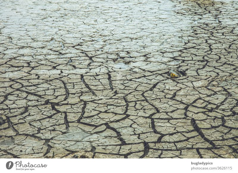Very dry soil/ mudflat/ sandy soil with large cracks and furrows. The soil looks as if it has been dried out by great heat or a drought. Ground