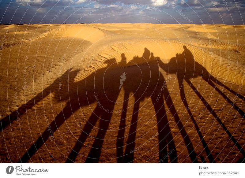 douze,tunisia,camel and people in the sahara's des Sand Sky Clouds Paw Brown Yellow Gray Green Red Black White gold Tunisia Sahara desert Dune curved arcuated