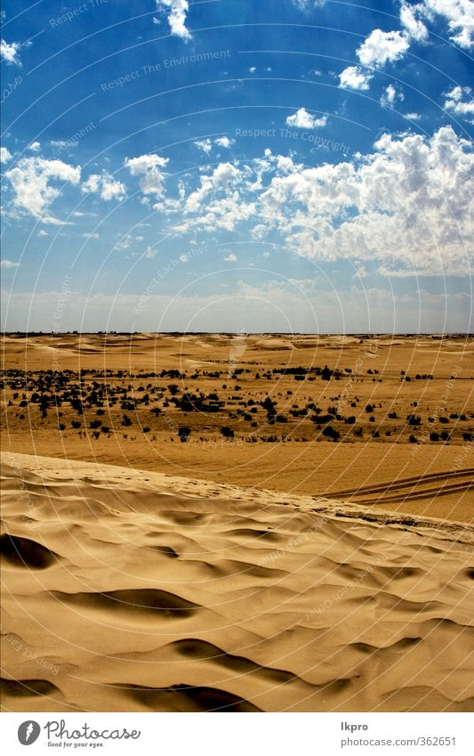 dune in the sahara desert and some bush Nature Sand Clouds Hill Line Brown Black White Loneliness Colour Tunisia Sahara Dune solitude water wave Light blue wood