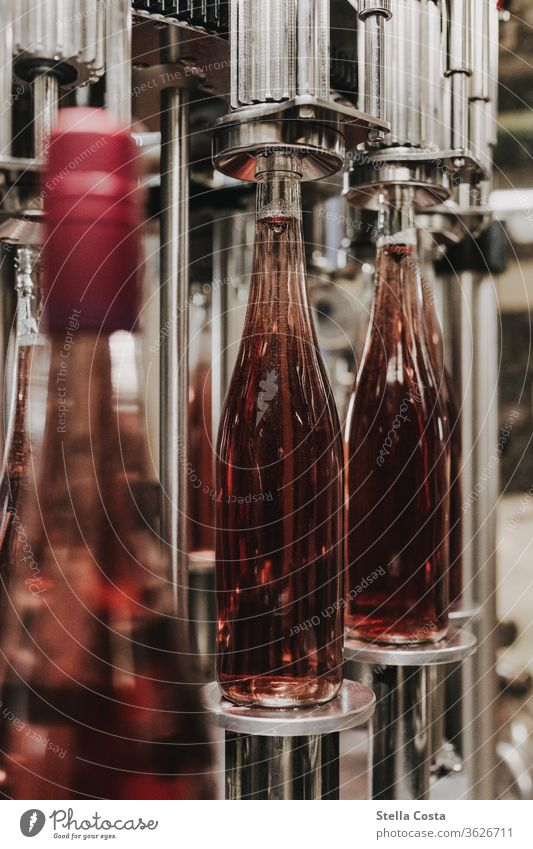 Detail picture of a wine bottling in the wine cellar Interior shot Vine Winegrower Alcoholic drinks Deserted Colour photo Shallow depth of field Close-up