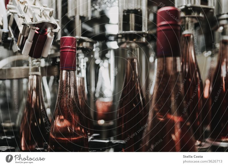 Detail picture of a wine bottling in the wine cellar Interior shot Vine Winegrower Deserted Alcoholic drinks Colour photo Shallow depth of field Close-up