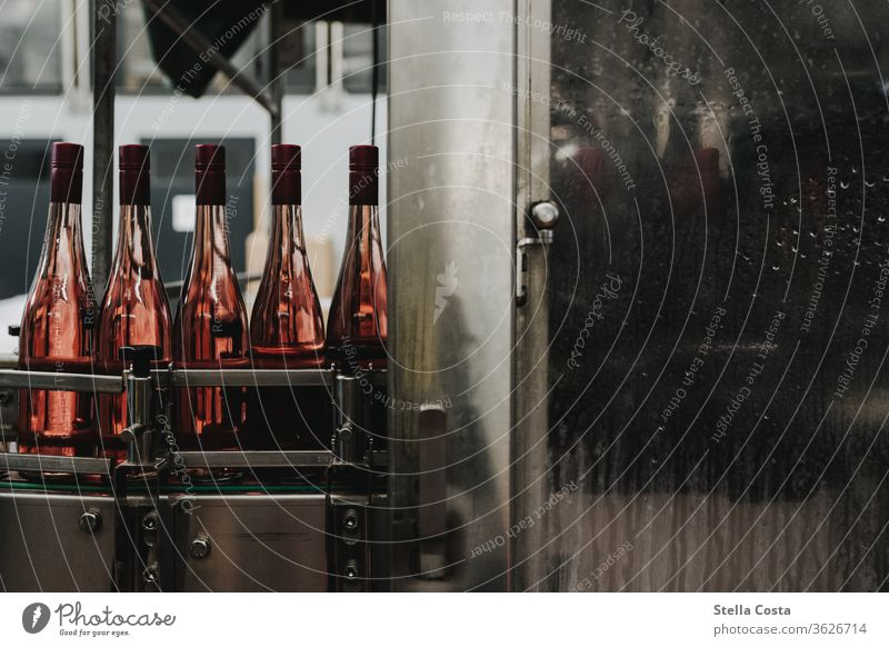 Pictures from the wine cellar during the bottling of rosé Rose Vine Winegrower Alcoholic drinks Deserted Colour photo Shallow depth of field Wine bottling