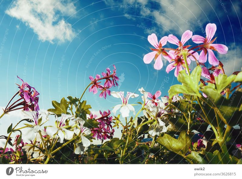 balcony picture Balcony plant Sky Clouds Air bleed flowers Beautiful weather Pot plant Plant Nature Growth Glittering Near Life Unwavering Hope Idyll