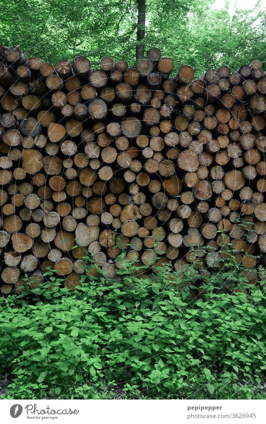 sawn logs in the forest tree trunks Nature Forest Exterior shot Environment Colour photo Landscape Deserted Day Plant Autumn huts Tree trunk wood Firewood