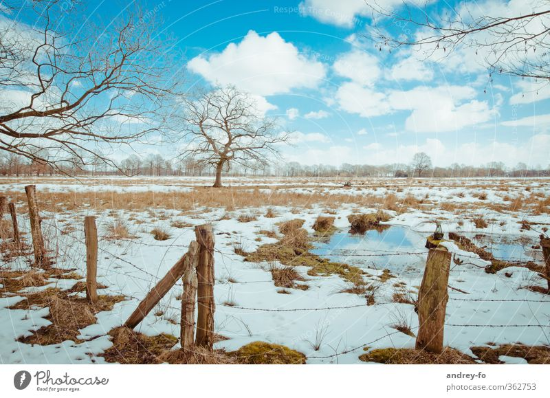 spring Nature Landscape Earth Water Sky Clouds Horizon Spring Winter Beautiful weather Ice Frost Snow Tree Grass Moss Meadow Field Cold Natural Blue Brown White