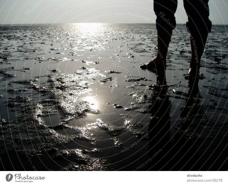 Feet in Watt Ocean Mud flats North Sea Landscape Water