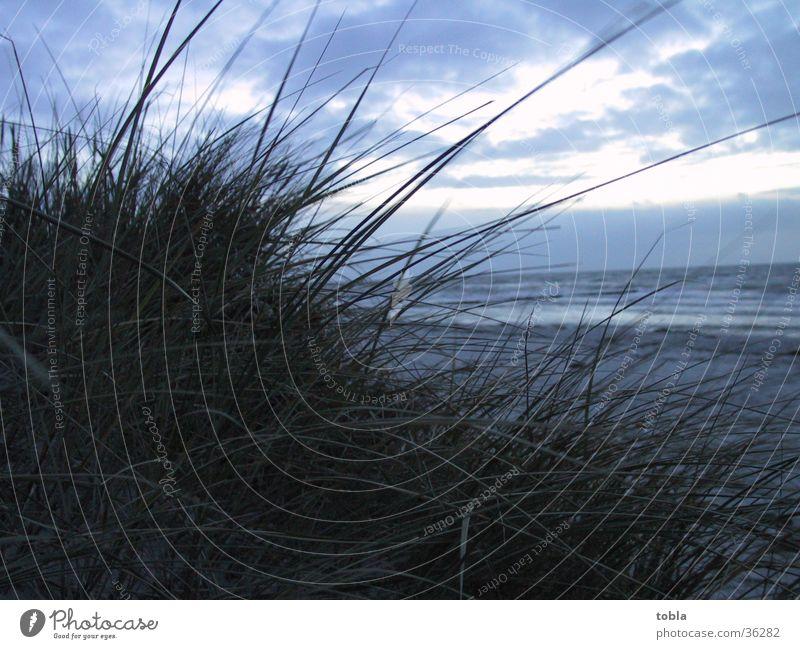 Beach Beach dune Baltic Sea Marram grass