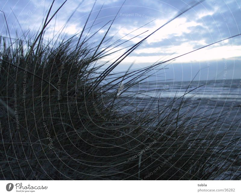 Evening atmosphere Hiddensee Beach Marram grass View of the Mee Beach dune Baltic Sea late autumn