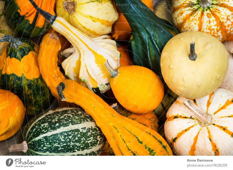 colorful ornamental pumpkins, gourds and squashes in the market variety fall food autumn vegetable halloween white green yellow fresh orange raw closeup nature