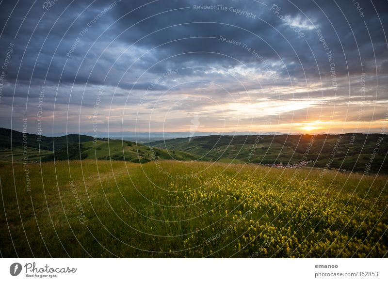  700  Kaiserstuhl Vacation & Travel Trip Freedom Mountain Hiking Environment Nature Landscape Plant Sky Clouds Sun Spring Summer Climate Weather Flower Grass