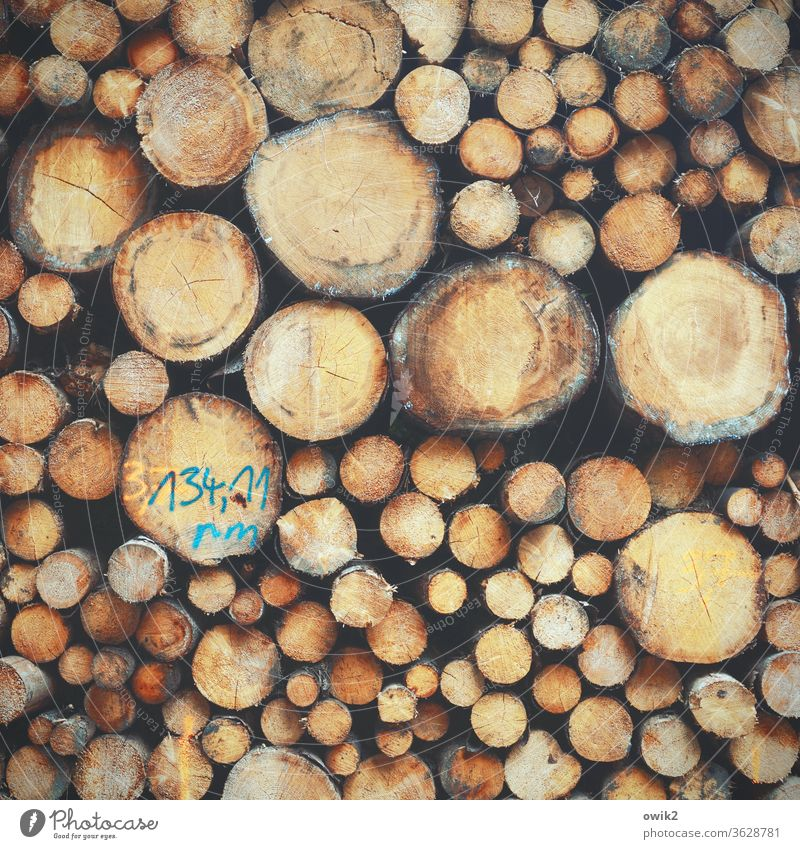 A question of descent tree trunks wood Many stacked Stack Tall Heavy disparate Exterior shot Colour photo Deserted Day Detail Nature Stack of wood Environment