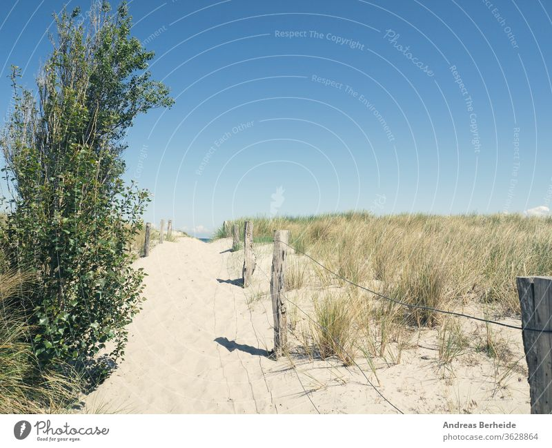 Pathway to the beach Germany background baltic beachgrass beautiful blue breeze coast desert dry dune dunes europe fence forest green health horizon landscape