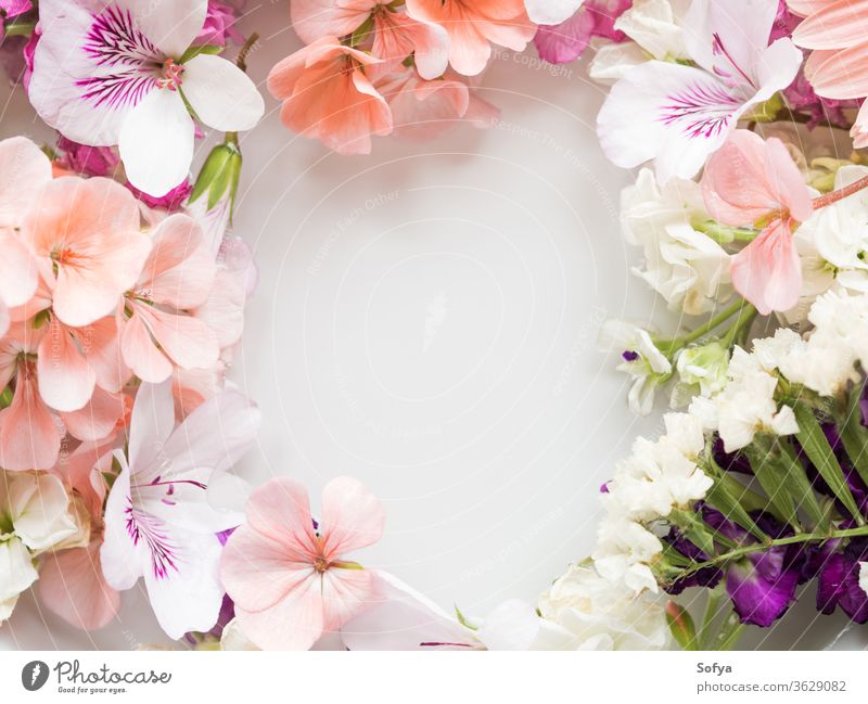 Beautiful pink and white flowers in water spring background petal color wedding pastel texture summer floral botanical nature natural spa wellness bloom blossom