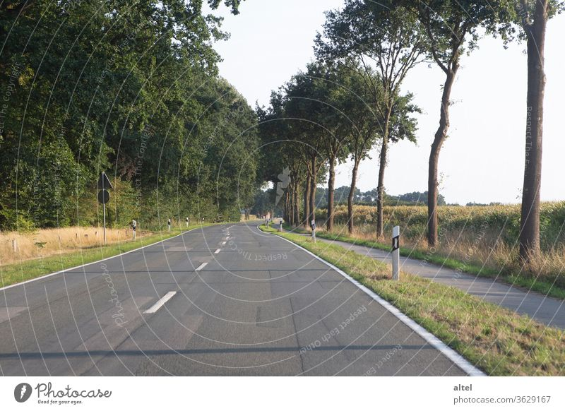 There's a road to nowhere Country road road trip Summer Trip Empty Loneliness Median strip Future Hope Infinity tree Freedom Traffic infrastructure Day