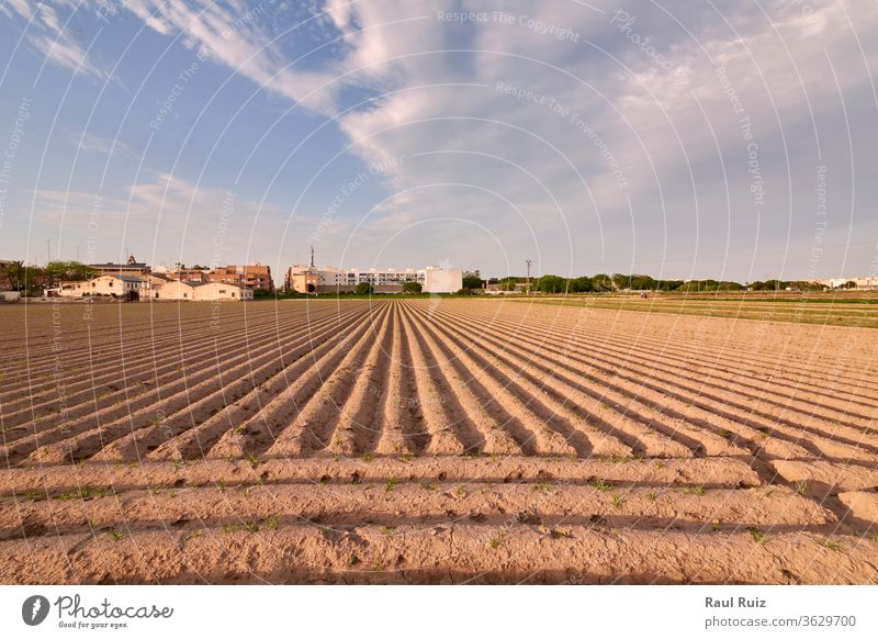 Agriculture field prepared for planting view earth plantation bright outdoor sunset farmland cultivated agriculture legume leaves growth business horizontal