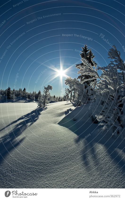 Sky Sun Tree Landscape Calm Winter Mountain Snow Freedom Happy Moody Power Climate Beautiful weather Bushes Elements