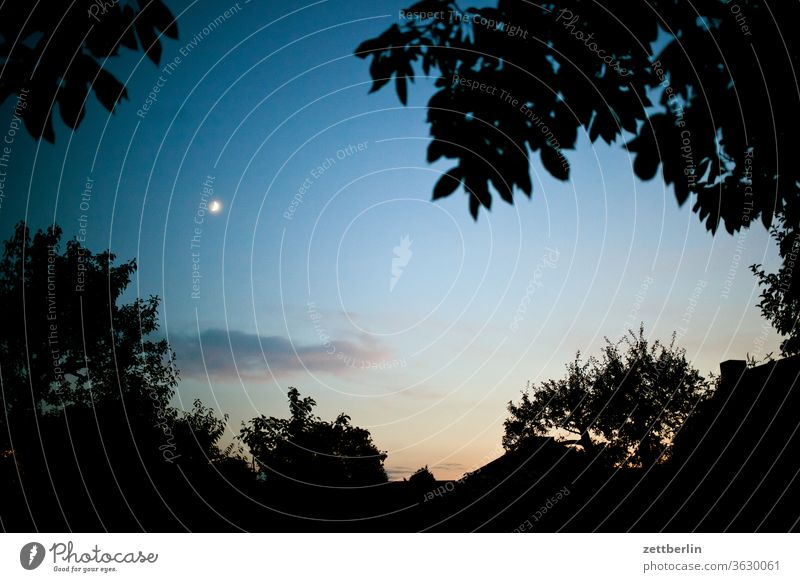 Moon in the evening Branch Twilight Evening Moonrise tree Moonlight Relaxation holidays Garden Sky allotment Garden allotments Deserted Nature Plant Lawn